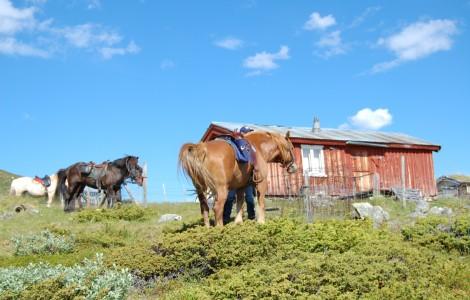 Hester på fjellet, Øien Øvre