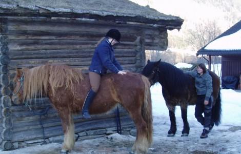 Hester og ryttere
